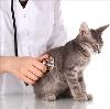 Ветеринарные клиники в Усинске